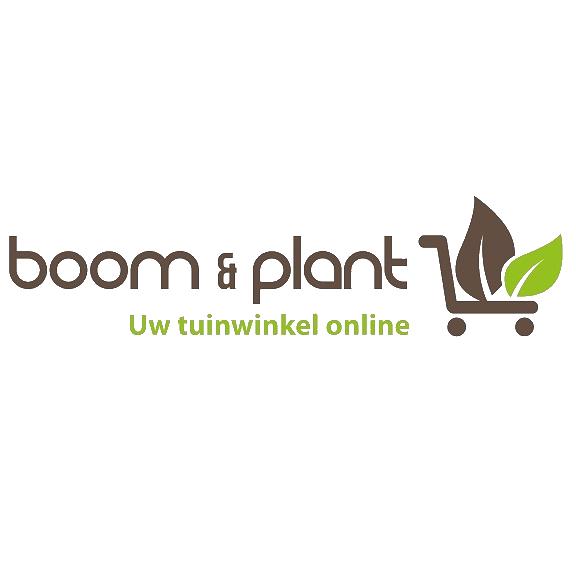 Boomenplant.be