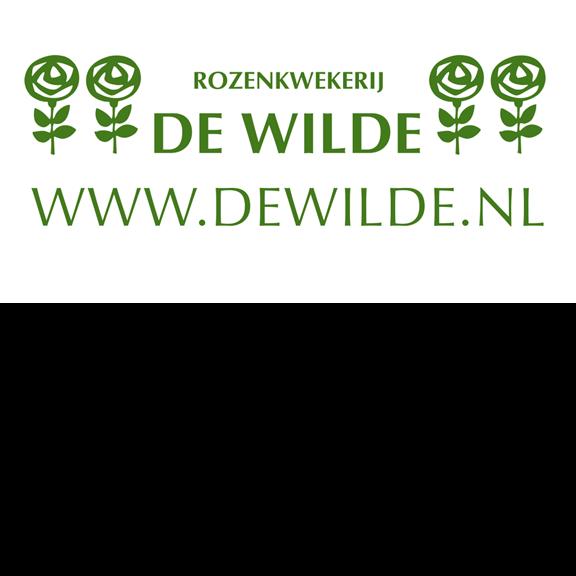 Dewilde.nl