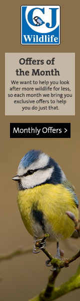 160 x 60 Monthly Offers Banner