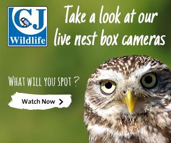 Live Nest Box Cameras