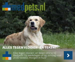 Golden Retriever hond liggend in gras