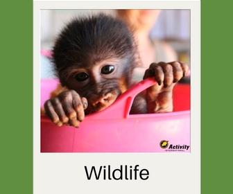 Wildlife projecten - Activity International
