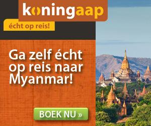 Koningaap - Myanmar