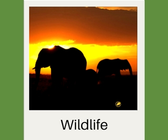 Wildlife projecten - Activity International
