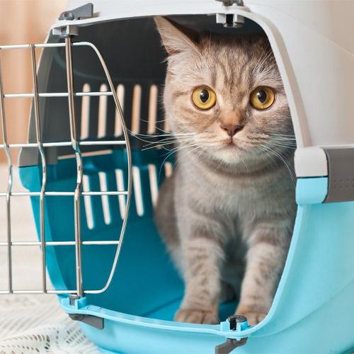 katten artikelen kopen