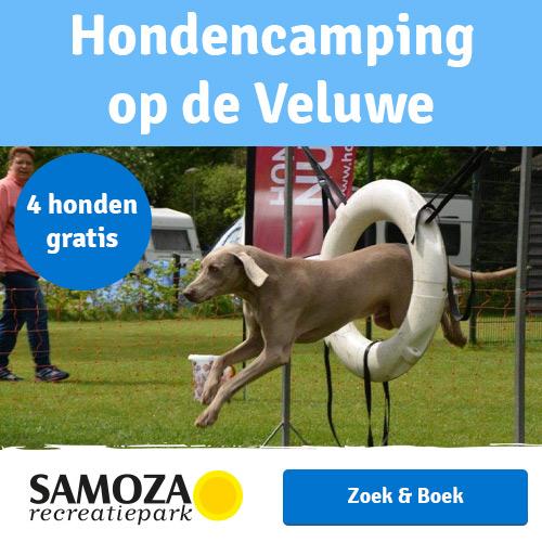 Hondencamping op de Veulwe