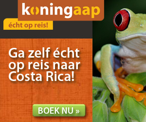 Koningaap - Costa Rica