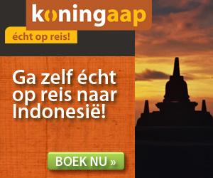Koningaap - Indonesie