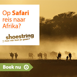 Shoestring - Safari