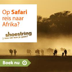 Shoestring - Safari
