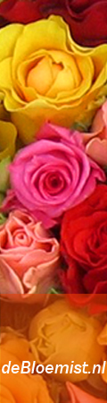 bloemen sturen, bloemen bestellen, bloemetje bezorgen