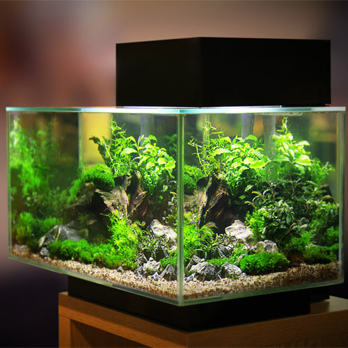 Aquariums kopen