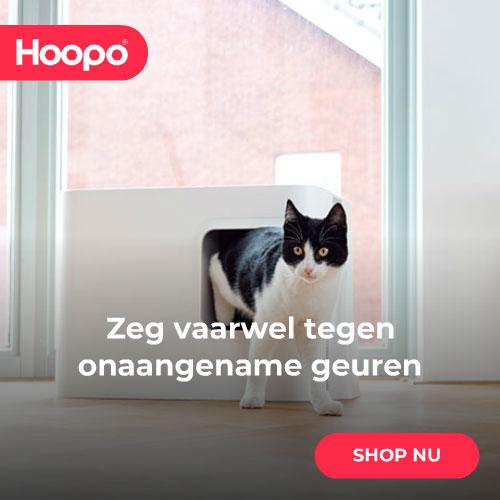 Hoopo